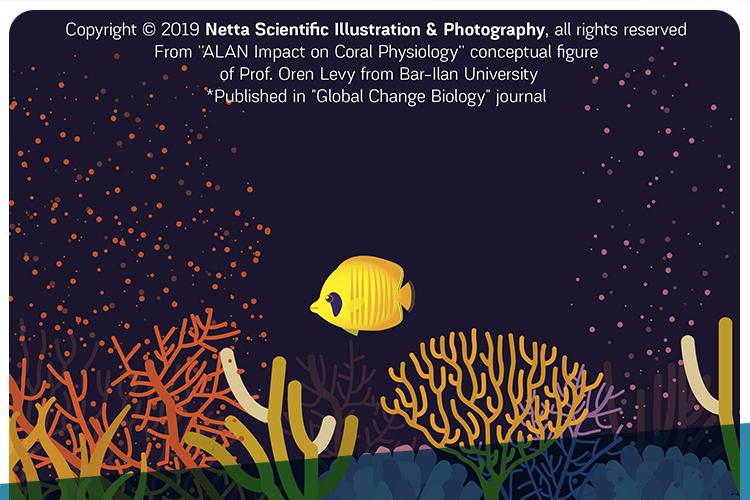 Netta Kasher - Academic Illustrations
