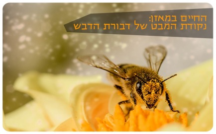 The Honey Bee Perspective