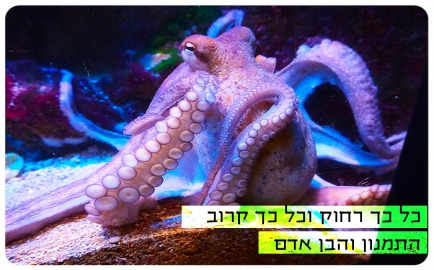 Faraway, Yet So Close! The Octopus and The Human