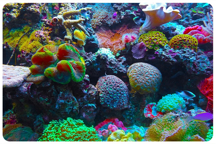 Atlas of Cells in Stony Coral Reefs