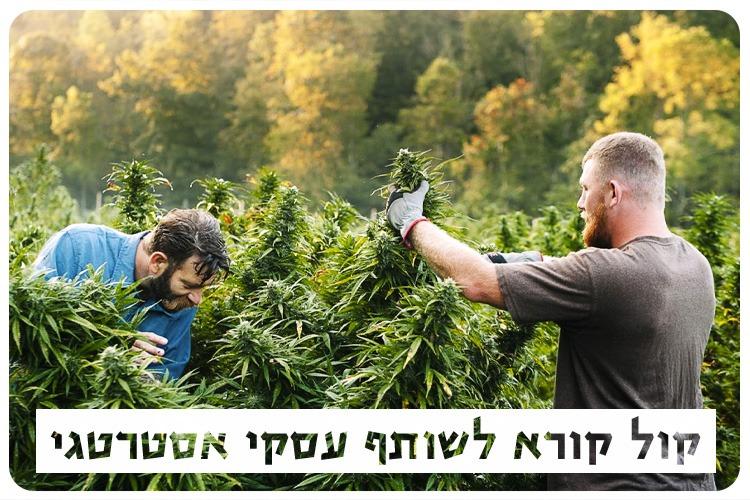 Open Call - Cannabis Research Partner